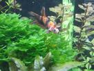 Nanocube 60L Dennerle - Shrimp home 1548359325-p1000038