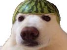 http://image.noelshack.com/fichiers/2019/04/6/1548522891-chien-melon.png
