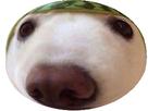 http://image.noelshack.com/fichiers/2019/08/7/1550969242-chien-melon6.png