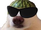 http://image.noelshack.com/fichiers/2019/08/7/1551041210-chien-melon7.png