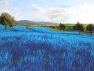 http://www.noelshack.com/2019-15-7-1555261545-ob-7f3f15-herbe-bleue.jpg