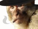 https://image.noelshack.com/fichiers/2019/20/2/1557862645-magot-cigarre-chapeau-noir.jpg