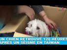 http://www.noelshack.com/2019-20-4-1558012016-1652ftxrtr2fun-chien-retrouve-120-heures-apres-un-seisme-en-taiwan-un-miracle-dans-la-minute-chien-1.png