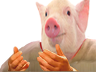 http://image.noelshack.com/fichiers/2019/22/1/1558960619-pigwtf.png