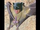 http://www.noelshack.com/2019-25-4-1560985965-4411916-bat-dick.jpg