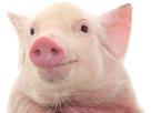 https://image.noelshack.com/minis/2019/28/3/1562739079-cochon-2.png