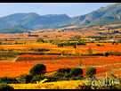 http://www.noelshack.com/2019-29-3-1563318920-france-paysage-vignoble-automne-p-3530.jpg