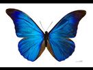 http://www.noelshack.com/2019-29-5-1563539065-papillon.jpg