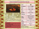 http://www.noelshack.com/2019-36-5-1567761881-qurupeco-rouge-page-001-1.png