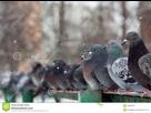http://www.noelshack.com/2019-37-3-1568211356-une-rangee-des-pigeons-44852049.jpg