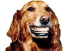 https://www.noelshack.com/2019-40-7-1570378262-1564361641-1483709929-1476456244-chien.png