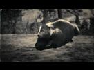 https://www.noelshack.com/2019-45-5-1573203425-animal-1.jpg