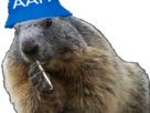 https://image.noelshack.com/fichiers/2019/47/3/1574262854-marmotte-qlf.png
