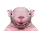 https://image.noelshack.com/minis/2020/04/3/1579726032-rat-filsdepute.png
