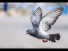 http://www.noelshack.com/2020-06-4-1580981557-2020-02-06-10-32-10-pigeon-recherche-google.png