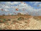 http://www.noelshack.com/2020-08-1-1581936003-nuee-sauterelles-canaries-0-730-273.jpg