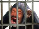 https://image.noelshack.com/fichiers/2020/12/4/1584629435-singe-zoo.png