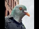 https://www.noelshack.com/2020-41-3-1602095956-masque-tete-de-pigeon.jpg