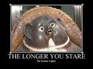 https://www.noelshack.com/2020-51-3-1608130972-longeryoulookatwtfisthat.jpg