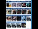 https://www.noelshack.com/2020-52-7-1609071750-screenshot-2020-12-27-sporepedia-advanced-creation-search.png