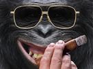 https://www.noelshack.com/2021-13-3-1617184007-singe-cigare.jpg