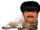 https://image.noelshack.com/fichiers/2021/29/4/1626957939-42-427622-cat-png-transparent-png.png
