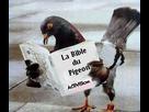 https://www.noelshack.com/2021-30-4-1627559224-pigeon10.jpg